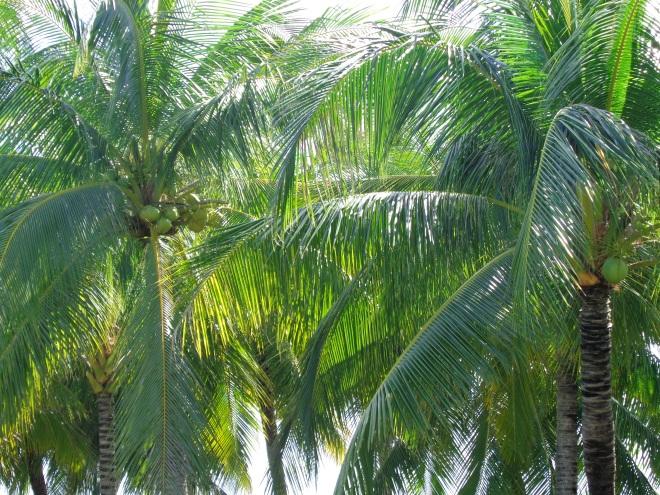 palmiers doc let