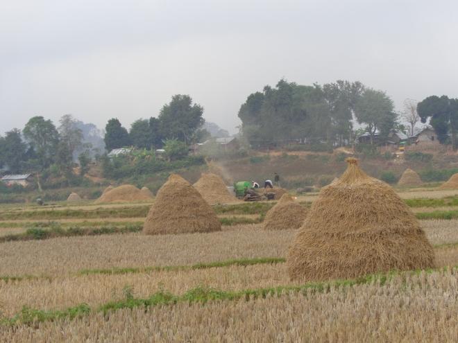 Récolte de foin, Hsipaw