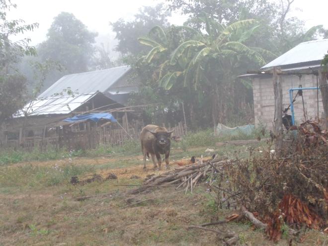 Certaines maisons sont dotées d'un puits (à droite)