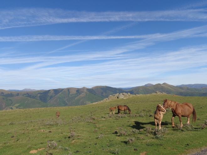 Chevaux, moutons, boucs et brebis accompagnent les pèlerins le long du chemin...
