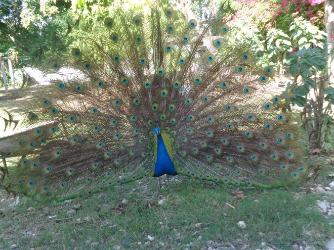 Dans le jardin de mon hôtel à Jacmel...