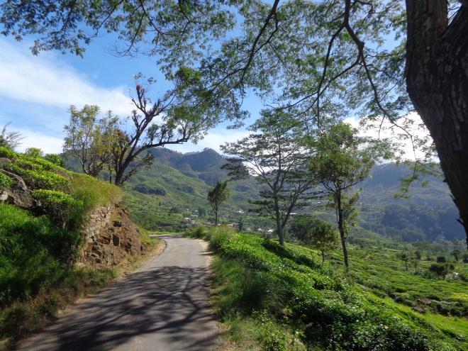 Entre Haputale et Dambatenne, même atmosphère, même altitude et même climat que sur les hauts plateaux du centre du Vietnam! Le paradis! Sur le chemin, ci-dessous,