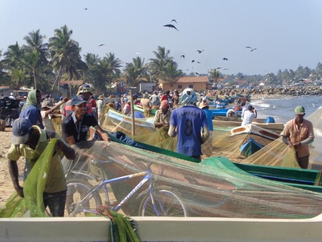 La plage et le marché de poissons de Negombo, samedi 24 décembre. Un thon de bonne taille, entier, se négocie ici 300 roupies, environ $3 ou